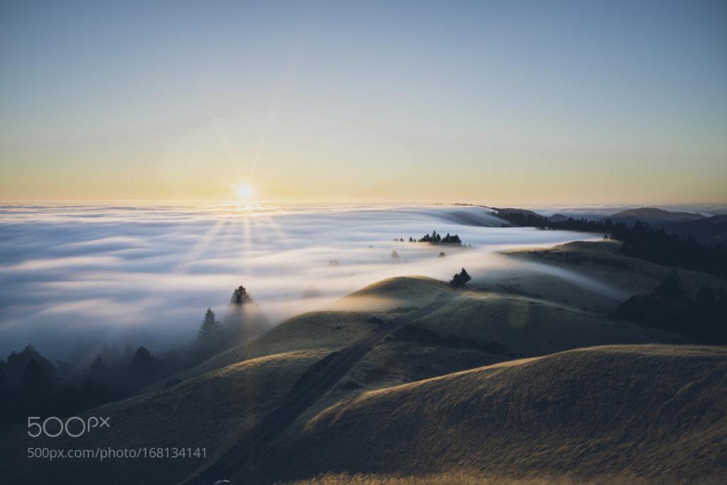 foggy plains
